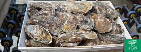 Stop No.28:辨别牡蛎大小与分类的效率提升
